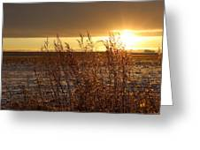 Sunset On Field Greeting Card by Christy Patino