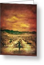 Sunset Over Vineyard Greeting Card by Jill Battaglia