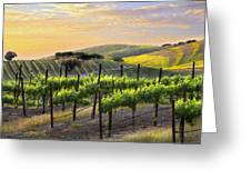 Sunset Vineyard Greeting Card by Sharon Foster