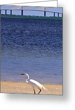 Sunshine Skyway Bridge With White Egret Greeting Card by Rose  Hill