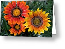 Surprise Greeting Card by Carol Sweetwood