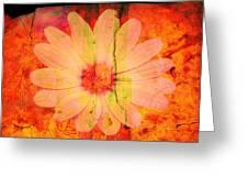 Surprise Me Greeting Card by Susanne Van Hulst