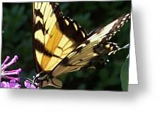 Swallowtail 2 Greeting Card by Anna Villarreal Garbis