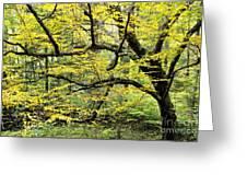 Swamp Birch In Autumn Greeting Card by Thomas R Fletcher