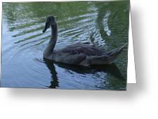 Swan Cygnet Greeting Card by Anna Villarreal Garbis