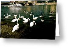 Swans Greeting Card by Ariane Moshayedi