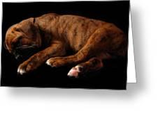 Sweet Dreams Puppy Greeting Card by Angie Tirado-McKenzie