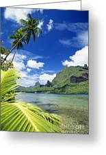 Tahiti, Moorea Greeting Card by Joe Carini - Printscapes