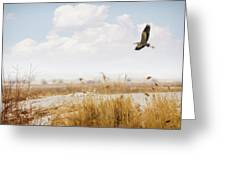 Takeoff Greeting Card by Priscilla Burgers