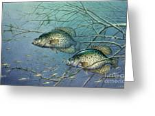 Tangled Cover Crappie II Greeting Card by Jon Q Wright