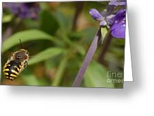 Target In Sight - Honey Bee Greeting Card by Steven Milner