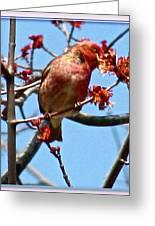 Taste Of Spring Greeting Card by Debra     Vatalaro