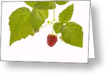 Tayberry Greeting Card by Andy Smy