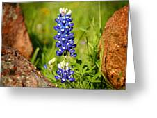 Texas Bluebonnet Greeting Card by Jon Holiday