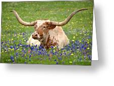 Texas Longhorn In Bluebonnets Greeting Card by Jon Holiday