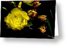 Texas Rose Vi Greeting Card by James Granberry