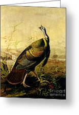 The American Wild Turkey Cock Greeting Card by John James Audubon
