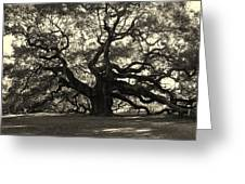 The Angel Oak Greeting Card by Susanne Van Hulst
