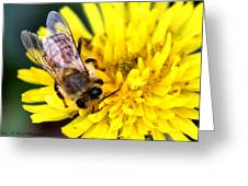 The Bee Greeting Card by Karen M Scovill