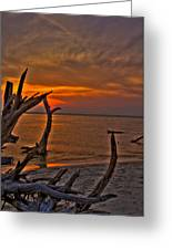The Cradle Of Life Greeting Card by Jason Blalock