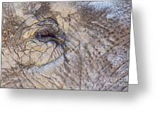The Elephant Eye Greeting Card by Angela Doelling AD DESIGN Photo and PhotoArt