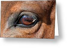 The Equine Eye Greeting Card by Terry Kirkland Cook