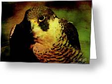 The Falcon Greeting Card by Wingsdomain Art and Photography