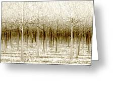 The Forest For The Trees Greeting Card by Holly Kempe