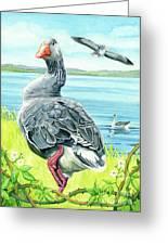 The Goose  Greeting Card by Antony Galbraith