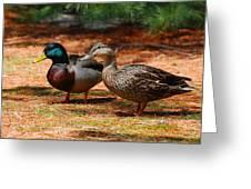 The Honeymooners - Mallard Ducks  Greeting Card by Angie Tirado
