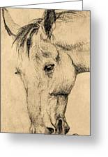 The Horse Portrait Greeting Card by Odon Czintos