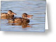 The Laughing Duck Greeting Card by Wingsdomain Art and Photography