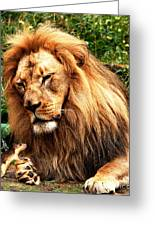 The Lion And The Mouse Greeting Card by Wingsdomain Art and Photography