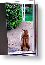 The Neighborhood Flasher Greeting Card by Guy Ricketts