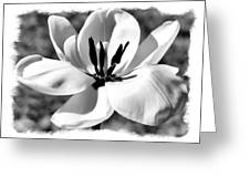 The Notecard Greeting Card by Karen M Scovill