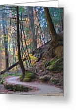 The Path Greeting Card by Peter  McIntosh