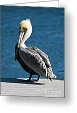 The Pelican Greeting Card by Steven Gray