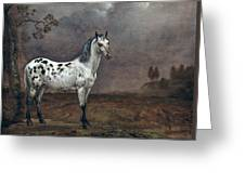 The Piebald Horse Greeting Card by Paulus Potter