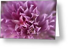 The Softest Touch Greeting Card by Barbara  White
