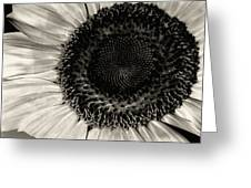 The Sunflower Greeting Card by Michael Wade