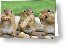 The Three Stooges Greeting Card by Lori Deiter