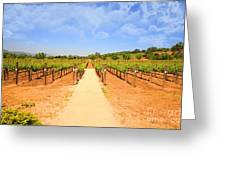The Vineyard Greeting Card by Cheryl Young