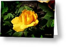 The Yellow Rose Of Garden Greeting Card by Tom Buchanan