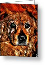 These Eyes Greeting Card by William Jones