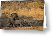 This Is Namibia No.  4 - Come On Bro I Wanna Play Greeting Card by Paul W Sharpe Aka Wizard of Wonders