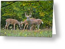Three Bucks_0054_4463 Greeting Card by Michael Peychich