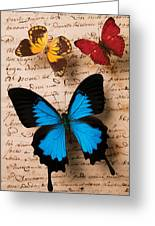 Three Butterflies Greeting Card by Garry Gay