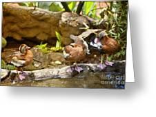 Three Ducks Greeting Card by Madeline Ellis