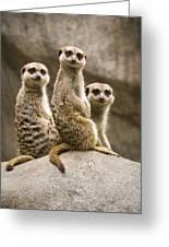 Three Meerkats Greeting Card by Chad Davis