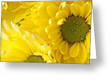 Three Yellow Daisies  Greeting Card by Garry Gay